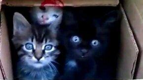 Нравятся котята? смотреть видео прикол - 0:40
