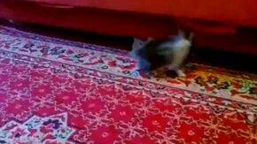 Котёнок против кролика смотреть видео прикол - 1:07