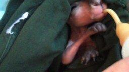 Смотреть Детёныш кенгуру