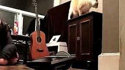 Неблагодарный котяра смотреть видео прикол - 0:18