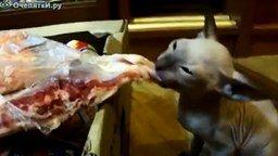 Моё мясо, моя прелесть! смотреть видео прикол - 1:57
