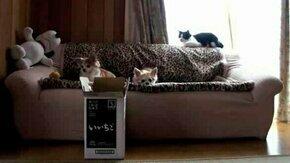 Смотреть Меткий кот и коробка