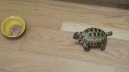 Смотреть Злая черепаха