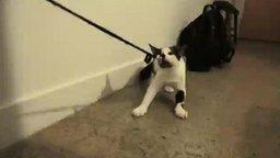 Смотреть Кот выгуливает хозяина