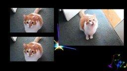 Кошачья песня смотреть видео прикол - 4:22