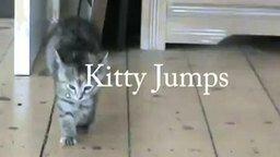 Котёнок-попрыгунчик смотреть видео прикол - 0:42