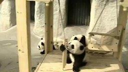 Смотреть Панды в парке развлечений