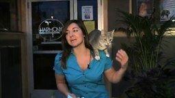Смотреть Ласковый котяра сорвал репортаж