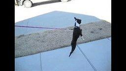 Смотреть Пёс-циркач