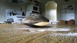 Смотреть Моллюск любит соль