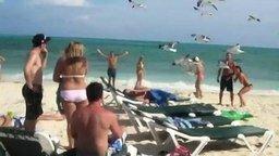 Чайки атакуют смотреть видео прикол - 1:05
