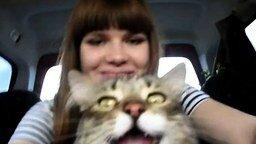 Первая поездка кота на дачу смотреть видео прикол - 0:19