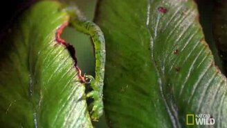 Смотреть Удивительная гусеница