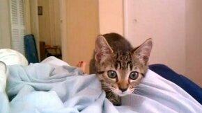 Смотреть Серьёзный котёнок