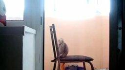 Миссия кота со стулом смотреть видео прикол - 1:02