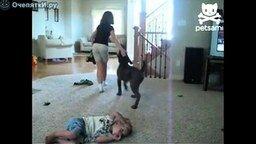 Смотреть Неуклюжий пёсик сел на малыша