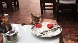 Смотреть Дерзкое ограбление на кухне