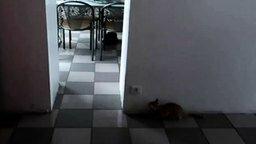 Игра в кошки-мышки смотреть видео прикол - 0:22