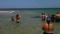 Неожиданные пляжные гости смотреть видео прикол - 2:35