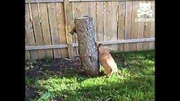 Смотреть Собака против белки
