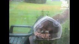 Акробатка-воровка смотреть видео прикол - 0:51