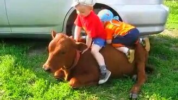 Смотреть Малыши и животные