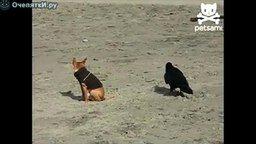 Ворон и собачонка смотреть видео прикол - 0:27