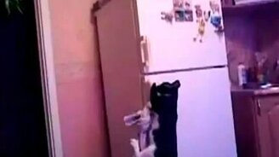 Смотреть Ниндзя на холодильнике