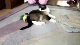 Птичка против кошки смотреть видео прикол - 1:29