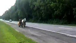 Гибрид лошади и машины смотреть видео прикол - 0:24