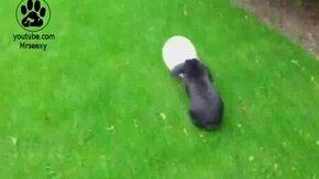 Смотреть Кролик и надувной шарик