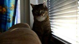 Когда коту скучно смотреть видео прикол - 0:52