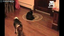 Хитрый собачий манёвр смотреть видео прикол - 0:23