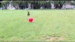 Яростная борьба с красным мячом смотреть видео прикол - 0:20