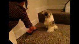 Смотреть Собака молится перед едой
