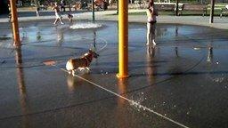 Смотреть Собачонка в водном парке