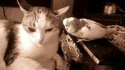 Смотреть Воспитательная беседа попугая