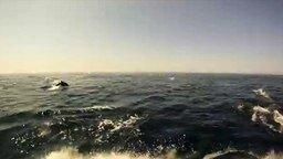 Смотреть В компании дельфинов