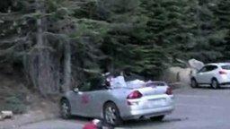 Смотреть Медведь распотрошил кабриолет