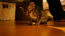 Смотреть Уставший малыш котёнок