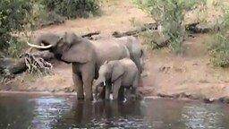 Схватка крокодила и слона смотреть видео прикол - 0:23