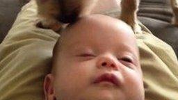 Собака-парикмахер для малыша смотреть видео прикол - 0:25