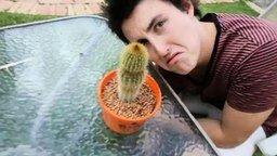 Смотреть Сжал голой рукой кактус