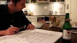 Смотреть Соорудил дом для кота
