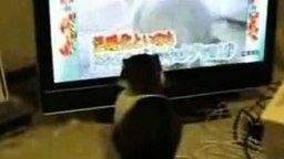 Кот и ТВ