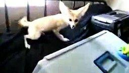 Странный зверёк с ушами смотреть видео прикол - 1:00