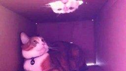Смотреть Вездесущие кошки