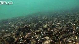 Смотреть Подводные законы