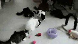 Забавные животные смотреть видео прикол - 4:12