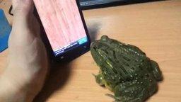 Вот так - играть с лягушкой смотреть видео прикол - 0:27